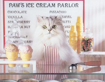 kucing-jualan-ice-cream
