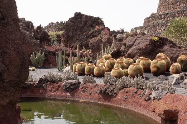 What is the best succulent and cactus soil