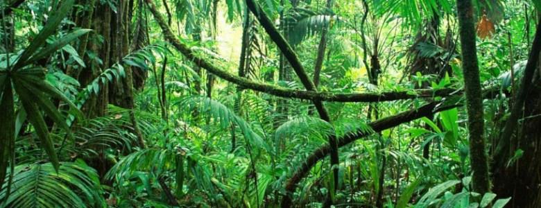 Florestas absorvem duas vezes mais CO2 do que emitem por ano