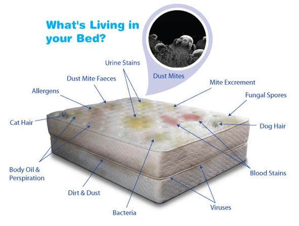 ... bed bugs encasings, mattress encasings, duvet encasings, pillowcases