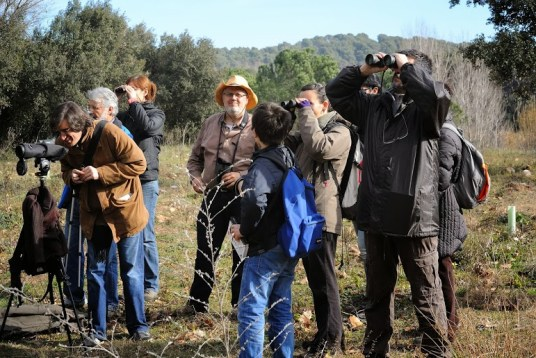 Bioblitzbcn - Birding group 2