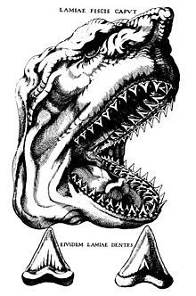 Изображение акулы Мегалодон Нильса Стенсена