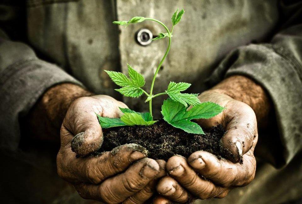 Madre Tierra y Vivir Bien