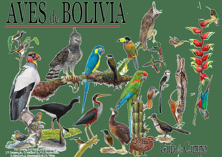 Bolivia ya cuenta con una Guía Ilustrada de Aves