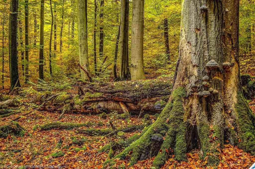 EWS - Hainich Wilderness -00102_.jpg