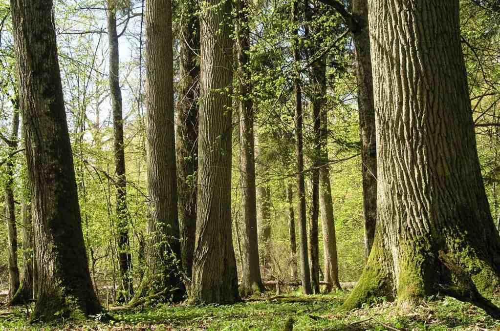 EWS - Hainich Wilderness -10243_.JPG