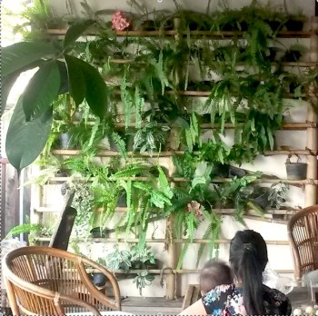 Mur végétal (Mae Hong Son, Thaïlande)