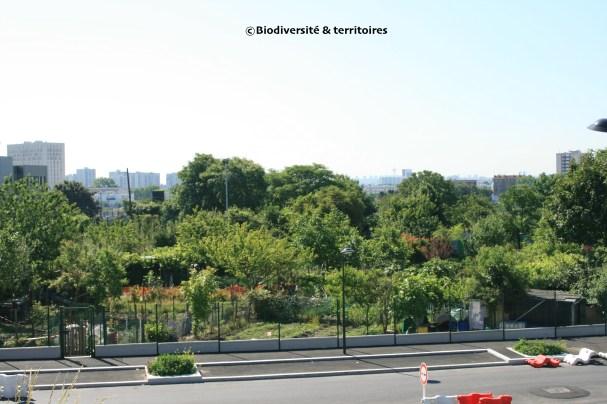 jardins familiaux (Nord-Ouest de la ZAC)