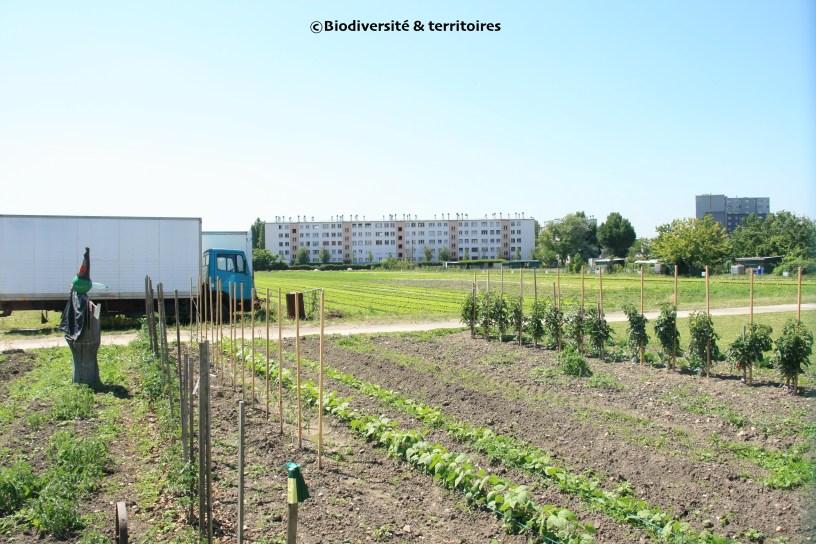 Exploitation agricole Kersanté (Saint-Denis, 93)