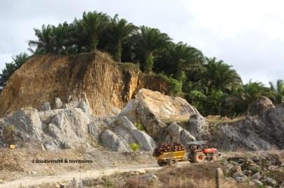 Palmeraie à huile (Philippines)