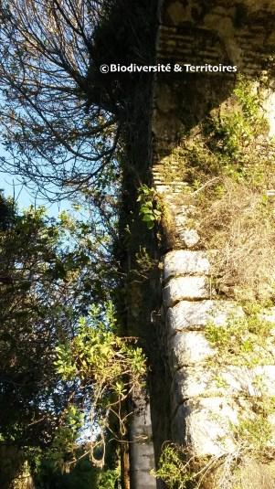 Aqueduc Romain, Vejer de la Frontera, Andalousie, Espagne