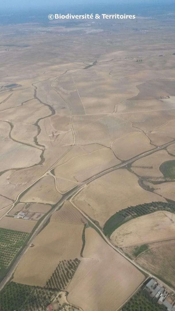 de la nécessité de gérer et aménager des espaces non productifs et de repenser le parcellaire des territoires agricoles. L'exemple espagnol en Andalousie