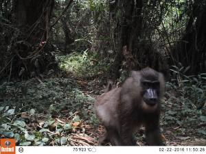 Mammals (Photo by BI, Bushnell field cameras).
