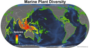 marine_plants_all_spp2