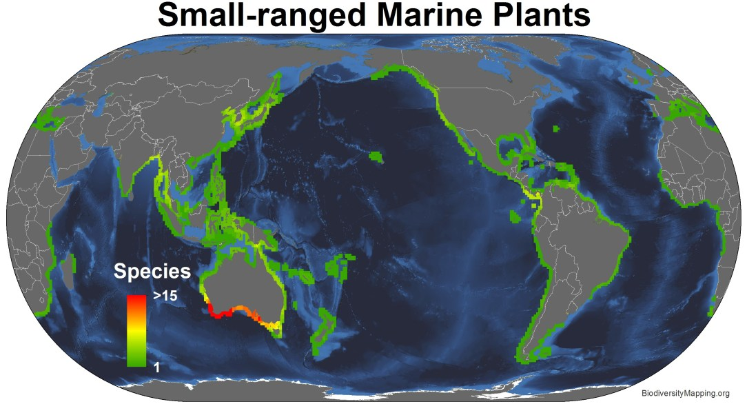 marine_plants_small_ranged2