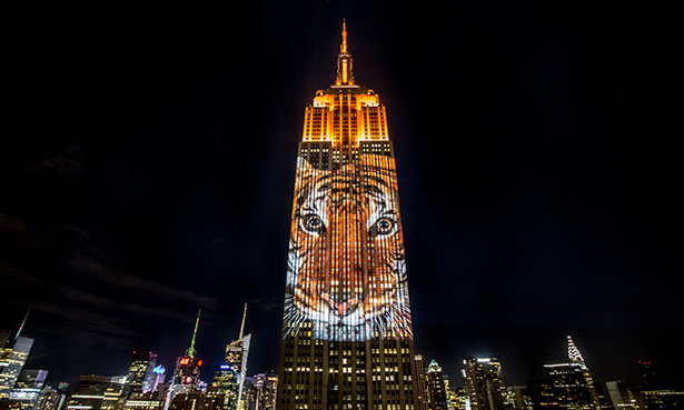 biodiversity photo empire state building racing extinction tiger projection travis threlkel