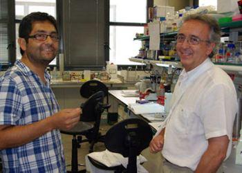 Researchers Juan Pablo Muñoz and Antonio Zorzano (IRB)