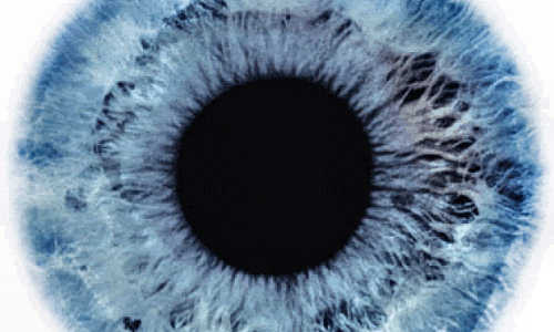 Stem Cell Discovery: Treatments for Blindness? | BIOENGINEER ORG