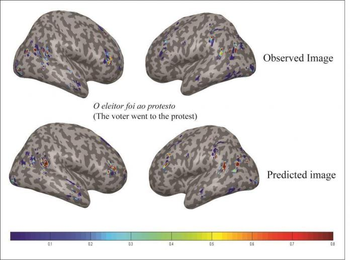 Brain 'reads' sentences the same in English and Portuguese