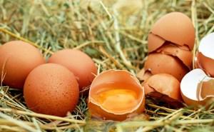 Œufs contaminés : Et l'élevage bio…