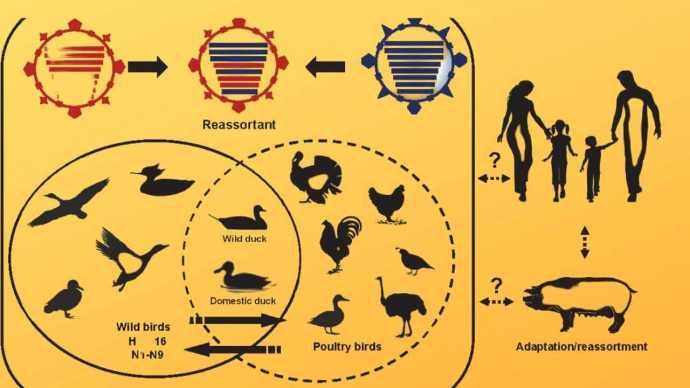 Avian-or-birdflu-and-other-zoonotic-influenza