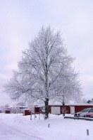 Parklind i vinterskrud