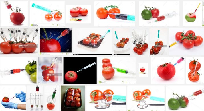 How to make a GMO, according to my google search