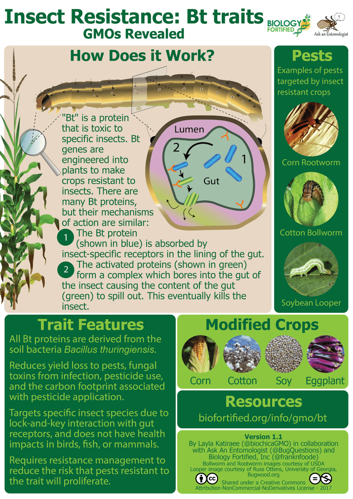 GMOs Revealed Bt trait infographic