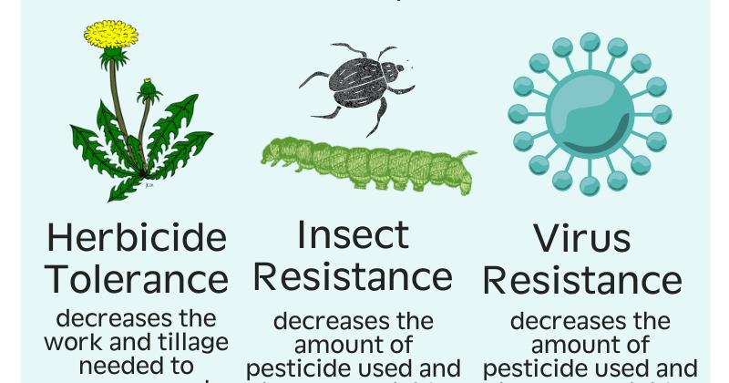 Intro to GMOs