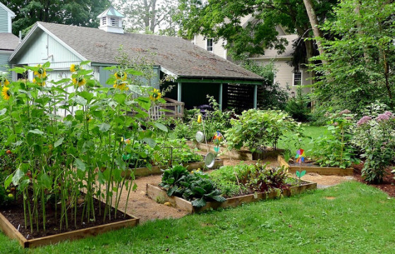 organic gardening food vegetables raised beds