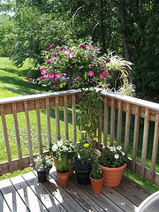 Potted flowers and plants on the deck