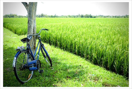 Bicycle by the tree