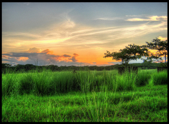 Nature HDR