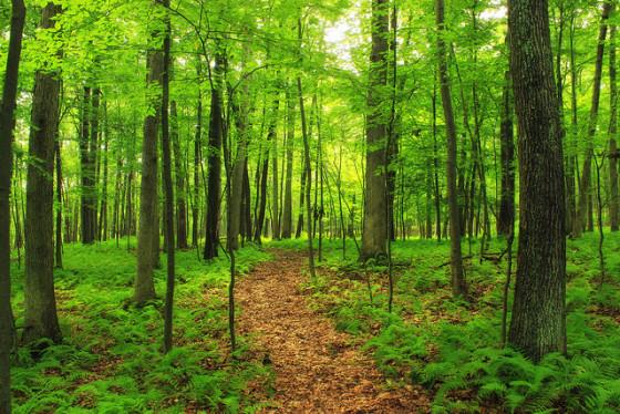 biofriendly walk through nature