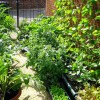 Simple Reasons to Start a Vegetable Garden