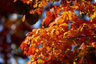 Biofriendly Cheatsheet: Making the Most of the Fall Season