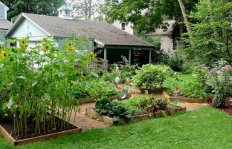 Fighting Organic Inequality Right from Your Own Backyard: Blog Action Day