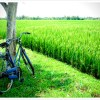 National Bike Month: Biofriendly Benefits of Riding Your Bike