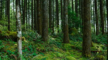 Earth Day: Planting Trees for the Future