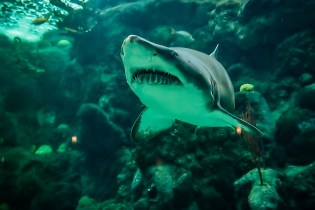 Smiling Shark | Image of the Day