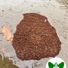 Fire Ants in an Epic Flood