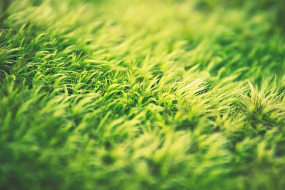 artificial grass eco-friendly