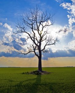 lone tree in nature