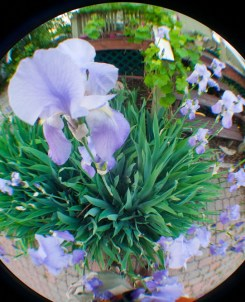 fisheye flower garden