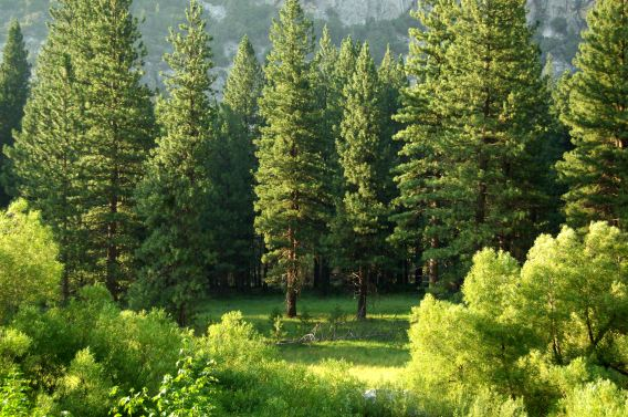 National Arbor Day: Trees and Climate Change Mitigation