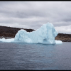 Lion Iceberg | Green Wings Award