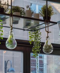 indoor-hanging-garden