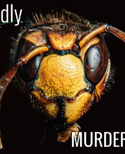 The Biofriendly Podcast - Episode 66 - Murder Hornets