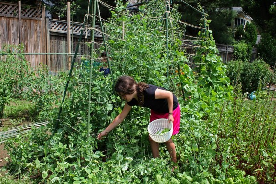 Teaching Children Sustainability Through DIY Projects