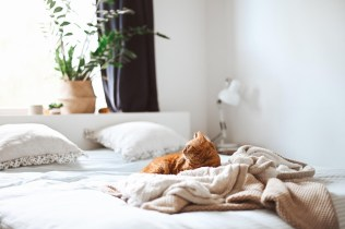 Dreaming of an Eco-Friendly Bedroom? 6 Tips to Make it Real